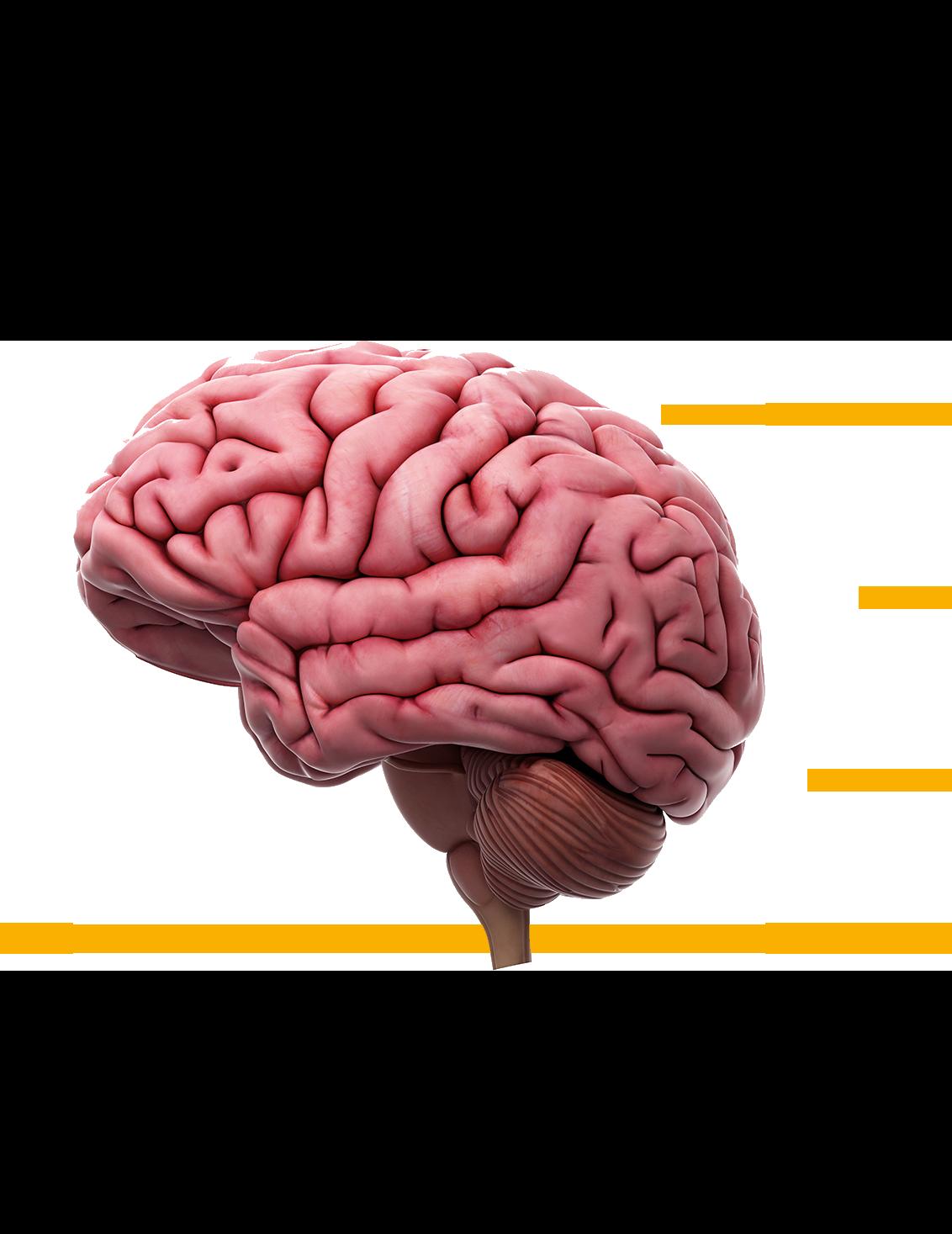 Gehirn Gesundheitszentrum Dr. Dr. Tadzic